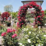 園を訪れた人から「バラの品種を聞かれることも多い」といい、品種名と特徴を書いた看板も設置している