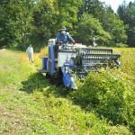 25日から収穫を依頼した「小諸高峰森の会」(小林邦太郎理事長)は、小諸市天池地区などで遊休農地を借りて約9万平方㍍の畑でソバを栽培。木曽会長が森の会の会員だったことなどがきっかけで、同隊に収穫作業を依頼した