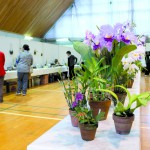 乙女湖体育館は様々な作品が並び、訪れる人たちの目を引いた