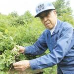 塩川農園ハスカップ